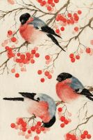 Bullfinches arrived. by An-Bird