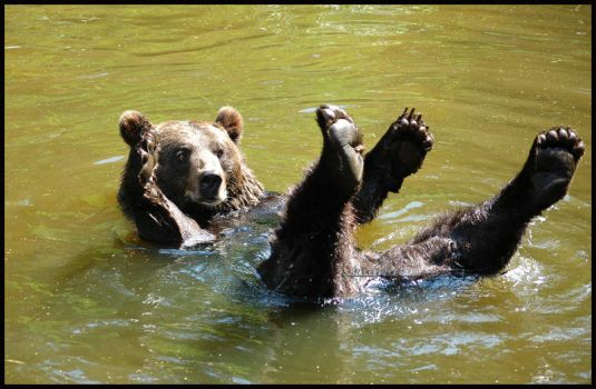 Brown bear 2 by grugster