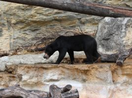 Sun Bear by Nolamom3507