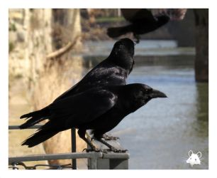 Crows 1 by Hubert11