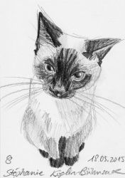 #006: cat (sketch) by Sillageuse