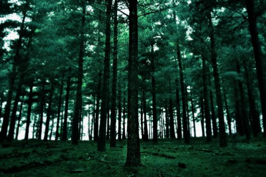 Harlequin Forest by TheUndyingLands