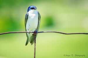 Bird on a wire... by TheLittleMaja