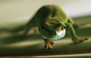 Yes, its a lovely day Mr Gecko by hepiladron