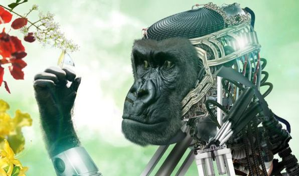 The Gorilla and the Butterfly by Magnus-mmvi