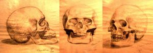 Charcoal Skulls by Pyrosity