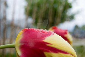 Raindrop Refraction by COphotog