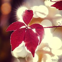 Autumn leaves by Gallynette