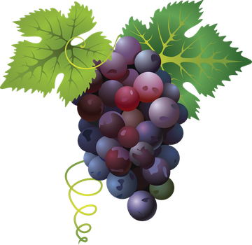 Bunch of grapes. by PRUSSIAART
