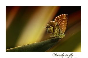 Ready to fly... by Nataly1st
