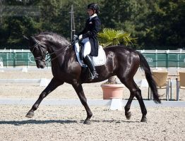 National Dressage and Jumping_24 by CalyHoney