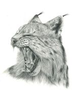 Lynx (Reupload) by Tiefenbacher