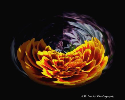 Marigold in a Bowl by thetopcrusader