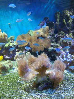 Coral Reef 6 by gwenna-stock
