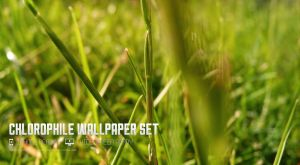 CHLOROPHILE WALLPAPER SET by OtherPlanet