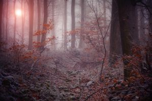 Where the magic happens by ildiko-neer