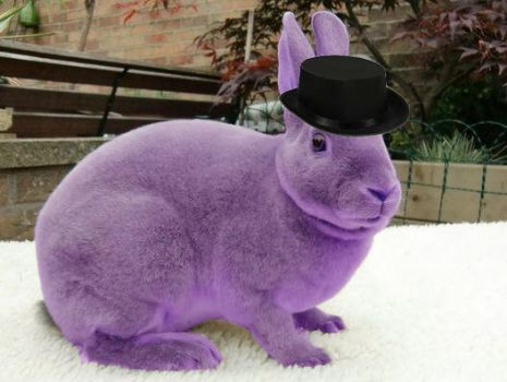 Just your average top hat wearing purple bunny. by 09099aazz