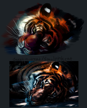 Tiger Study by Sweet-n-treat