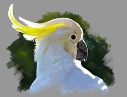 Sulphur-Crested Cockatoo by ColorstainedRaven