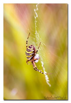 Dreamy Spider by Emilie25