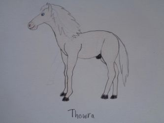 Thowra the silver brumby by woodywoodwood
