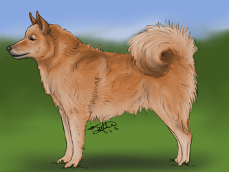 Finnish Spitz by KnifeInToaster