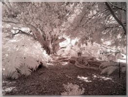Botanical Gardens - Roots by JohnK222