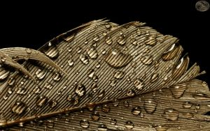 Raindrops on a Feather III by webcruiser