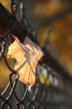wire and leaf by Frannernanner