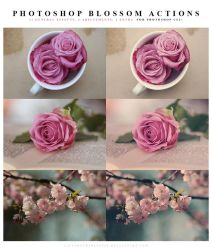 Photoshop Blossom Actions by meganjoy