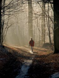 Morning Run in the Forest by Balduinus