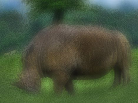 Black Rhinoceros 2 by AlberichPotter