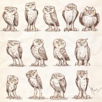 Owls characters by Ptich-ya