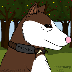 my Wolfplay avatar by wolflover7948