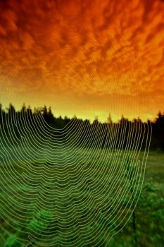 landscape and spider web by KariLiimatainen