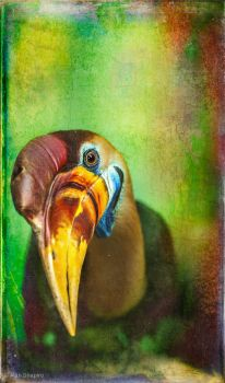 Finer Feathered Friends- Red knobbed Hornbill 2 by ashapiro515