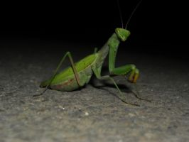 Mantis looking at the camera by s3xyyy