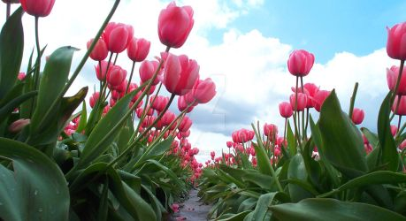 Bug's View of Pink Tulips by MogieG123