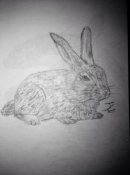 Bunny Sketch by Kaisly