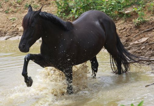 Black Beauty - Water Stock 2 of 13 by Lovely-DreamCatcher