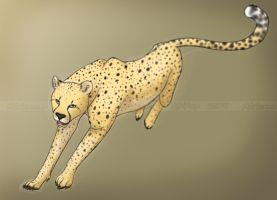 Cheetah by CravenLunatic