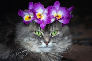 Masyanya in  a  wreath of orchids by Daykiney