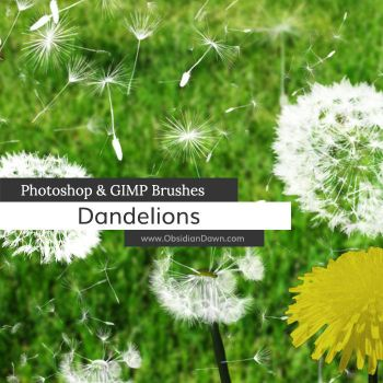 Dandelions and Seeds Photoshop and GIMP Brushes by redheadstock