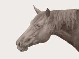 Horse in Profile by graphitemyers