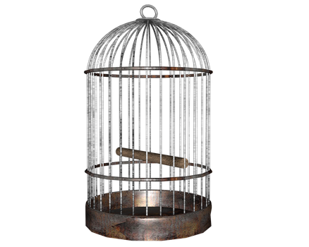 bird cage side shot of many by madetobeunique