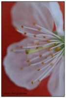 flower a19 by liviugherman