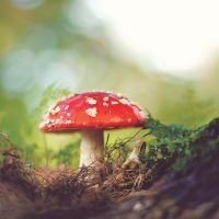 Toadstool by meganjoy