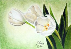 White Tulip flowers - colored pencils by f-a-d-i-l