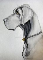 Great Dane Watercolor by HouseofChabrier