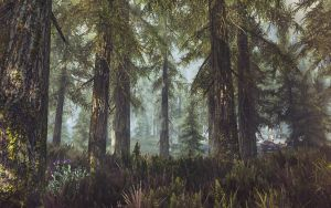 A walk through the woods- Skyrim by WatchTheSkies45